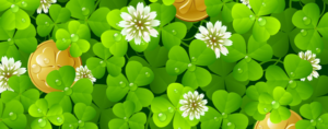 St Patrick's green clovers