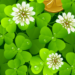 Blast From the Past's St. Patrick's Day Tribute – Thur, March 16